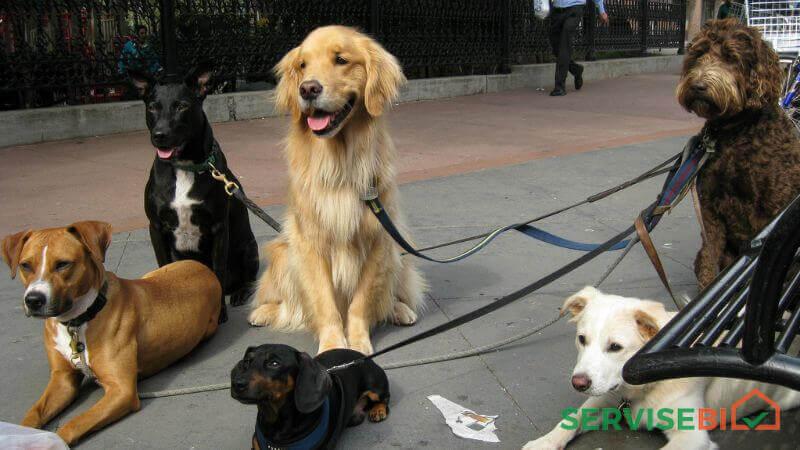 ძაღლის გასეირნება საბურთალოზე, 1სთ 10ლ. 2სთ 15ლ