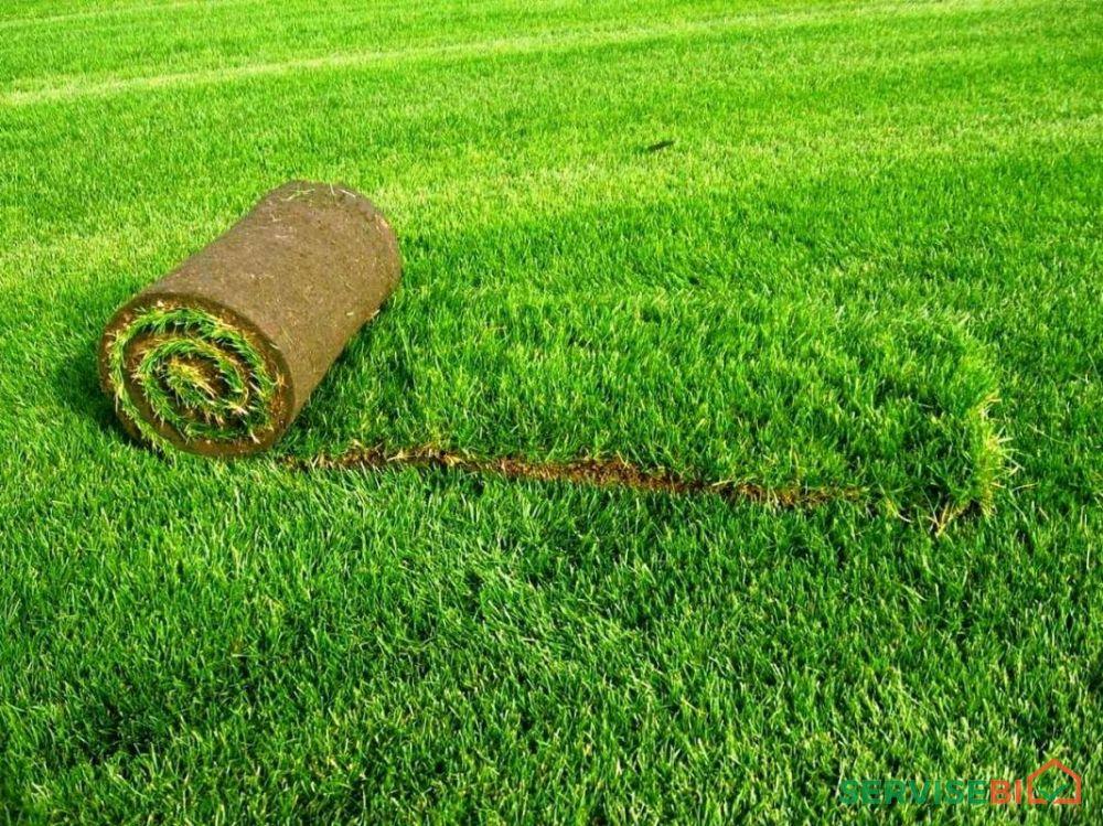 გამწვანება-რულონური გაზონი სარწყავი სისტემები