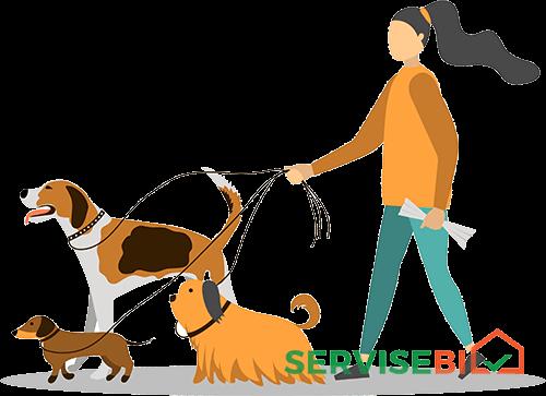 ძაღლების გასეირნება