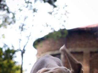 """ძაღლების დროა """"It's Time For Dogs"""""""