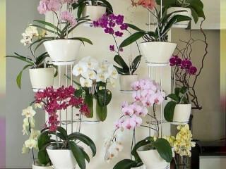 ოთახის მცენარეების  მოვლა