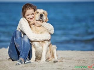ძაღლის გასეირნება