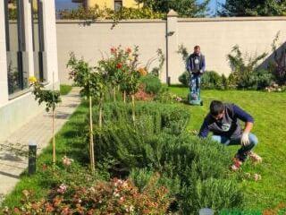 გამწვანების მოწყობა/სარწყავი სისტემის კეთილმოწყობის პროექტის შედგენა
