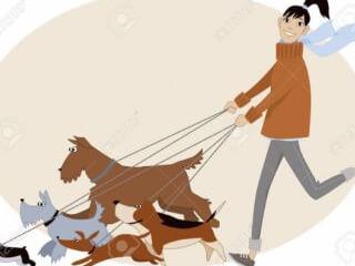 ცხოველების გასეირნება, დავარცხნა, ფრჩხილების და ყურების მოწესრიგება